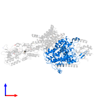 PDB 7bgy contains 1 copy of Potassium-transporting ATPase potassium-binding subunit in assembly 1. This protein is highlighted and viewed from the front.