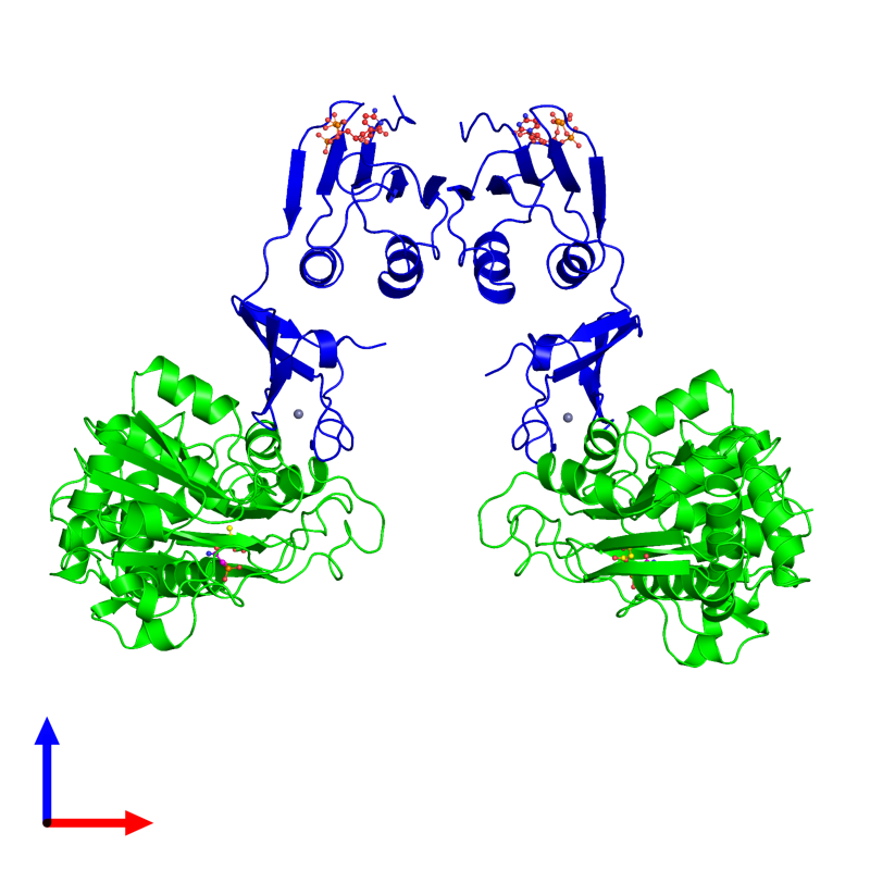<div class='caption-body'><ul class ='image_legend_ul'>The deposited structure of PDB entry 8at1 coloured by chemically distinct molecules and viewed from the front. The entry contains: <li class ='image_legend_li'>2 copies of Aspartate carbamoyltransferase catalytic subunit</li><li class ='image_legend_li'>2 copies of Aspartate carbamoyltransferase regulatory chain</li><li class ='image_legend_li'>3 non-polymeric entities<ul class ='image_legend_ul'><li class ='image_legend_li'>2 copies of PHOSPHONOACETAMIDE</li><li class ='image_legend_li'>2 copies of ZINC ION</li><li class ='image_legend_li'>2 copies of CYTIDINE-5'-TRIPHOSPHATE</li></ul></li></div>