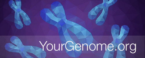 YourGenome.org