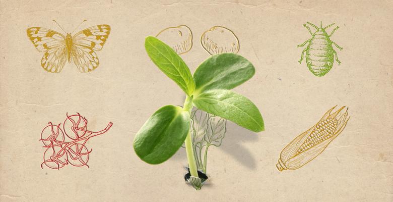 Food security and bioinformatics | European Bioinformatics