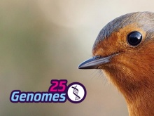 25 genomes logo and image of robin. Image credit: Wikimedia Commons and Sanger Institute, Genome Research Ltd.