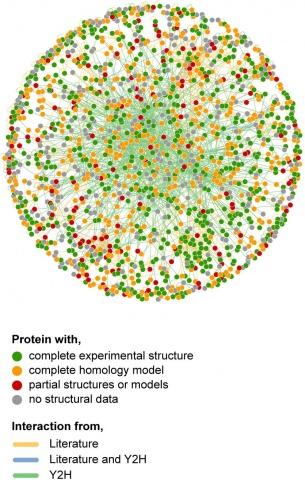 Detail of E. coli interactome