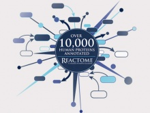 Reactome: 10,000 protein records