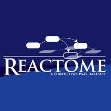 Reactome: A resource for molecular reactions