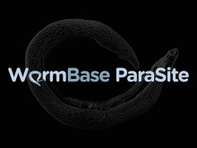 Parasitic worm genomes
