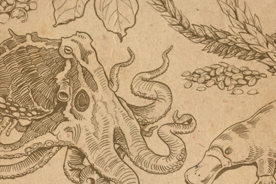 Sketches of octopus, platypus and wheat. Credit: Spencer Phillips/EMBL-EBI