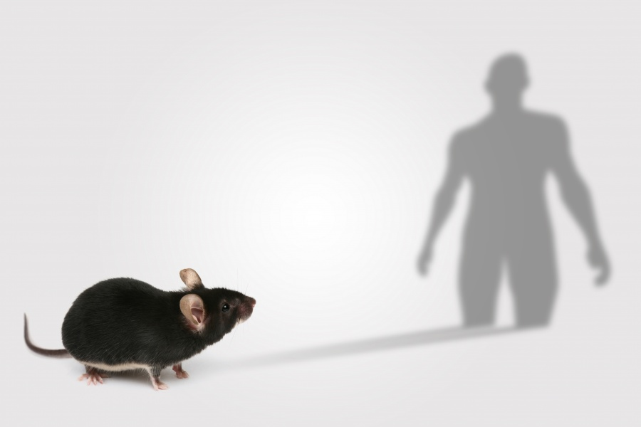Mouse genes could help decipher human disease. Image: Spencer Phillips