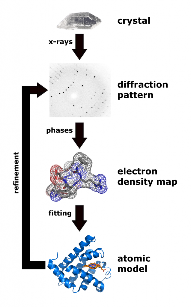 Workflow for X-ray crystallography