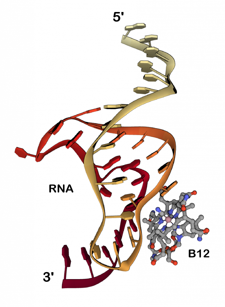 The structure of vitamin B12 bound to RNA