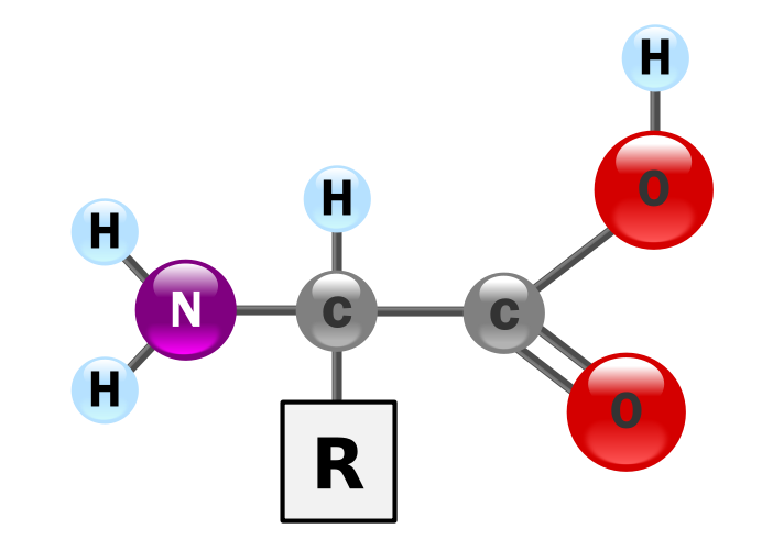 Structure of an alpha amino acid