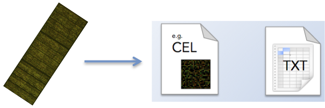 Feature extraction involves the conversion of the scanned microarray image to quantifiable values that are saved in binary (e.g. CEL) or text format