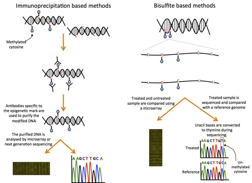 Methods for detecting DNA methylation