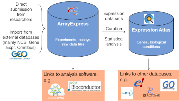 The relationship between the ArrayExpress and Expression Atlas databases