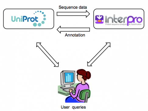 Flow of data between InterPro and UniProt databases