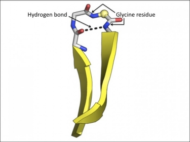 Beta turn structural motif