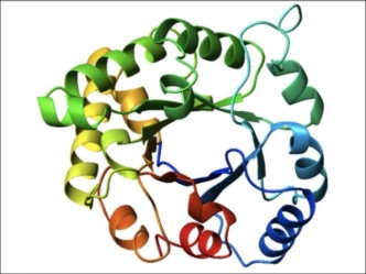 An example of a protein fold
