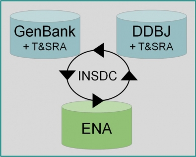 Daily exchange of data between INSDC partners