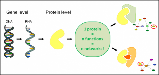 understanding the functions of proteins and The quest to understand why proteins have their particular sequences, structures, and functions lies at the heart of both protein biochemistry and molecular evolution some early structural biologists were interested in how evolution produced modern proteins ( 60 , 64 , 83 ), but evolutionary analysis never entered the mainstream of the field.