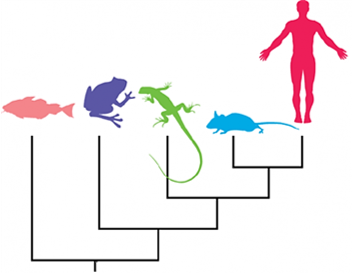 how to read a phylogeny