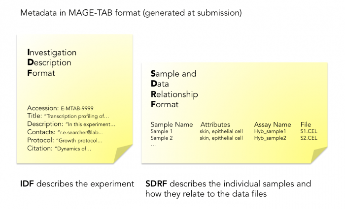 Representation of experiment metadata in Investigation Description Format (IDF) and Sample Data Relationship Format (SDRF) spreadsheets