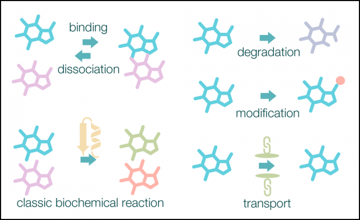 Different types of metabolic reactions