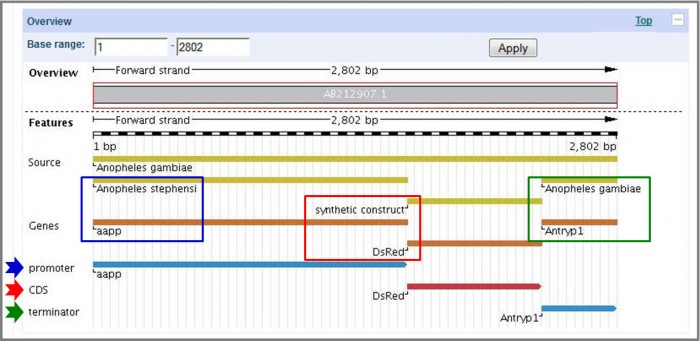 A graphical overview section of EMBL-Bank entry AA212907