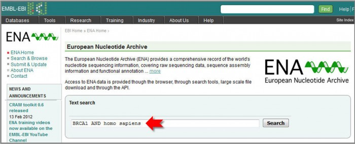 To search ENA, type 'BRCA1 AND Homo sapiens' into the text search box