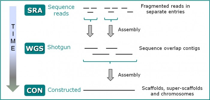 An image showing how the sequence assembled