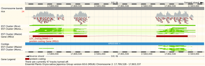 Visualising a BAM file in Ensembl Genomes