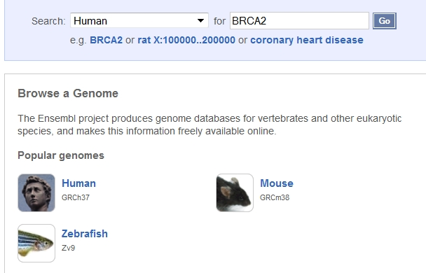 Searching for a gene on Ensembl