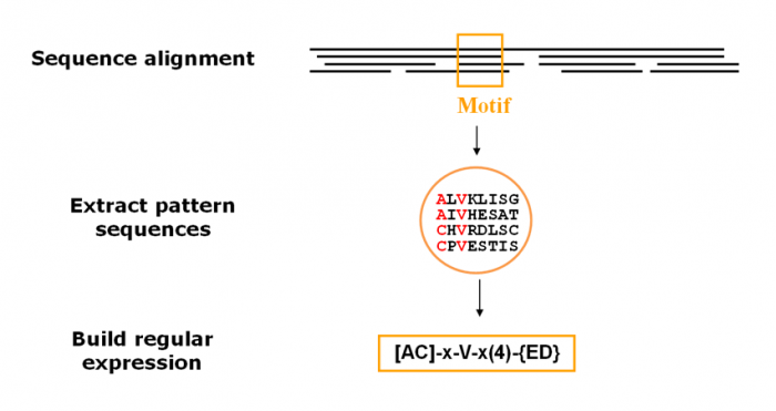 Figure  13.  When creating patterns, a conserved motif is used to build a regular expression. The pattern illustrated here is translated as: [Ala or Cys]-any-Val-any-any-any-any-{any but Glu or Asp}.