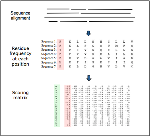 Figure  14. Representation of a scoring matrix based on a multiple sequence alignment. Each of the 20 amino acids commonly found in proteins is given a score for each position in the sequence according to the frequency with which they occur in the original alignment. Other factors, such as evolutionary distances can also be considered.