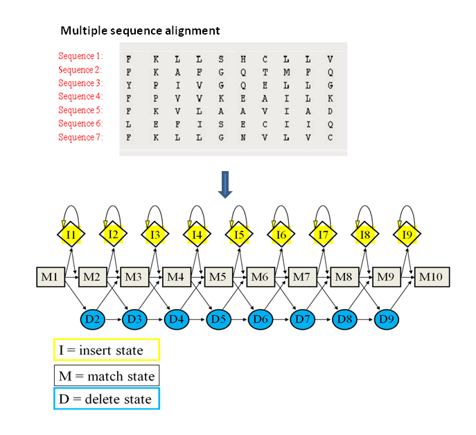 Figure  17. A hidden Markov model  representation of a multiple sequence alignment. As  in profiles, the presence of a given amino acid in  each position is given a scoring value (M), but  in HMM insertions (I) and deletions (D)  are also considered.