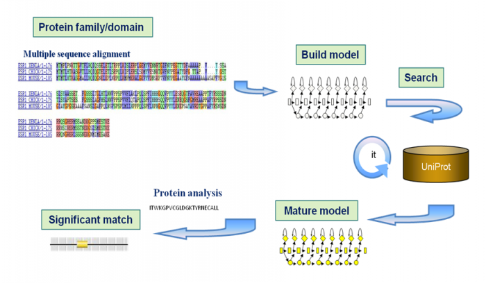 Figure  10. The process of building a protein signature starts with a multiple sequence alignment, which is used to build a predictive model. By searching a protein database in an iterative way, more distantly related  sequences can be identified. This information is used to  create a final mature model.