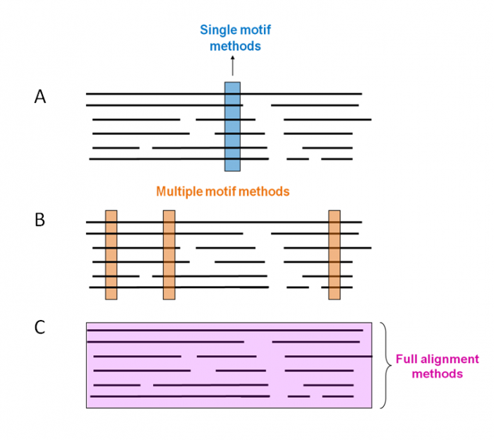 Figure  12. Representation of different strategies for building signatures. A) single motif methods, B) multiple motif methods; and C) full alignment methods. Protein multiple sequence alignments are represented by black lines and the conserved regions used to build the signatures are indicated by coloured boxes.